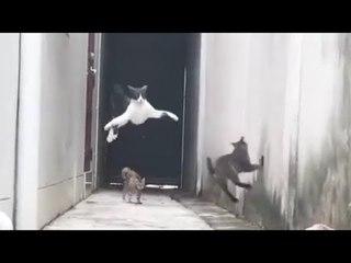 ЭКСКЛЮЗИВ! Русские приколы с котами до слез Смешные коты под музыку – Смешные кошки МатроскинТВ