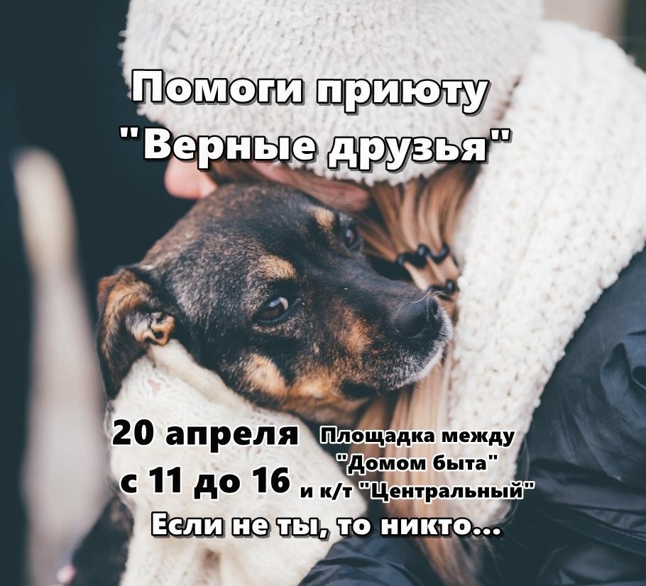 Афиша Калуга Сбор помощи для приюта «Верные друзья»