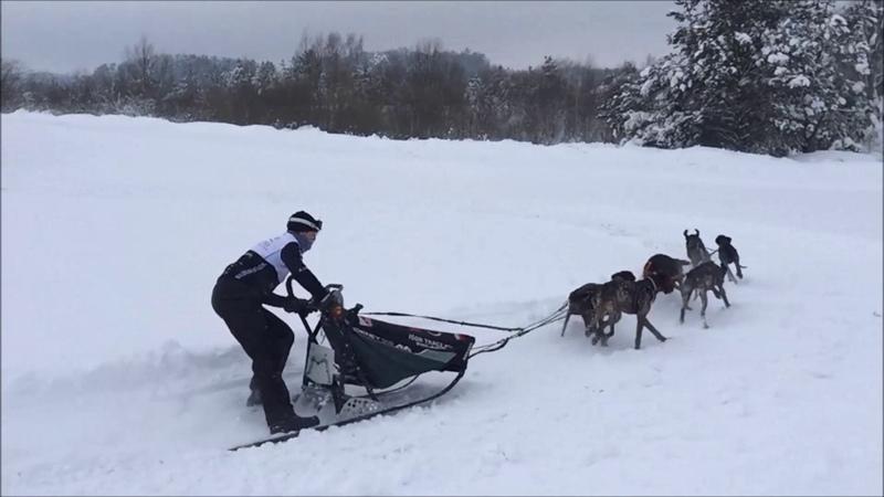 Trudne początki Sled dog sport