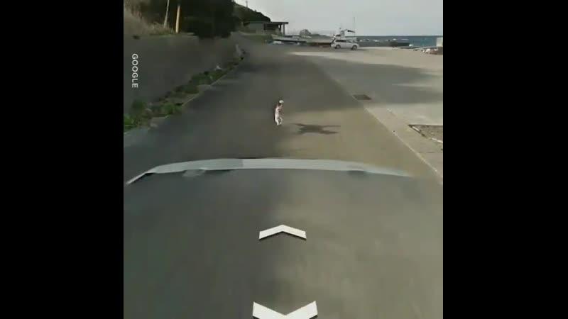 Собакен преследует ГуглоМобиль