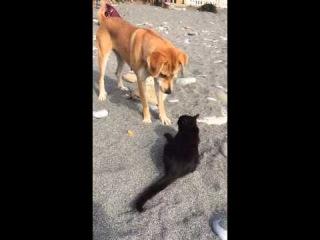 Кошка и собака на пляже в Лоо.