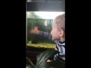 Дрессировщик рыб