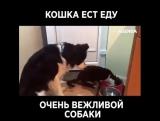 добрая собачка и наглый кот