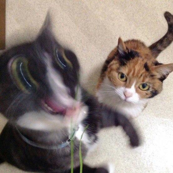 """""""Коротко о моих попытках сфотографировать моего кота."""""""