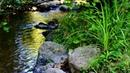 Очень Красивая и Расслабляющая Ambient Relaxing Music на фоне Звуков Природы
