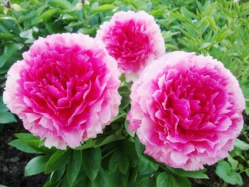 Продам растения - Страница 26 M4Iv0tWFmyA