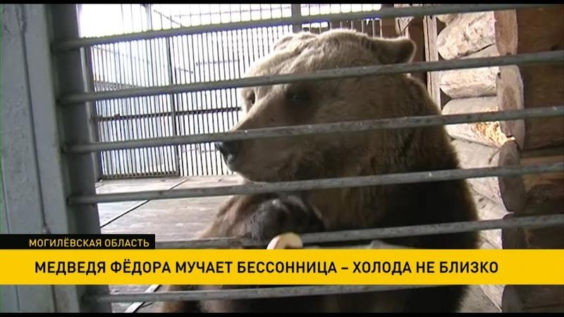 Медведя Фёдора из Могилёва мучает бессонница а значит холода отнюдь не близко