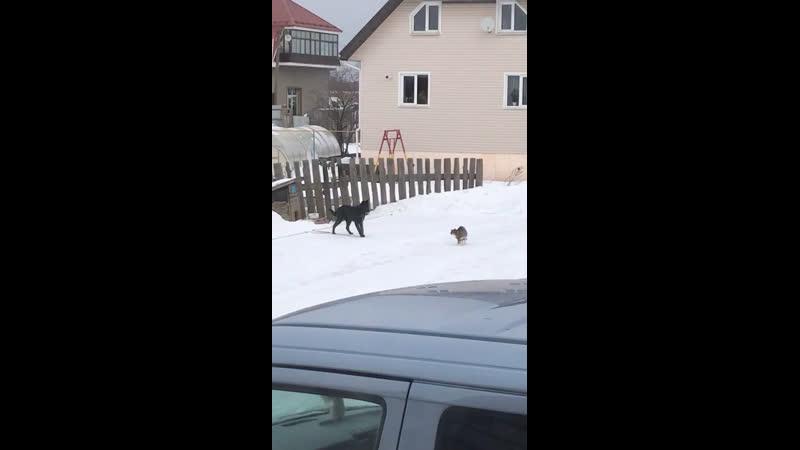 Тет-а-тет с кошкой 🐱🐶
