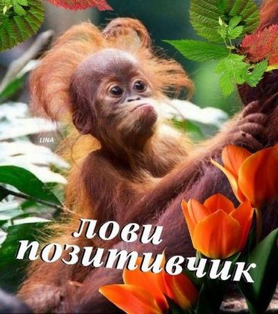 Василий Петров, 31 октября 1997, Москва, id191208600