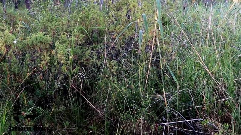 Таёжная тропа Ловля хариуса на нахлыст в Карелии Ночёвка Отдых на природе