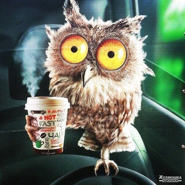 Утро начинается не с кофе. А с попытки осознать: кто я, где я и куда сегодня про...
