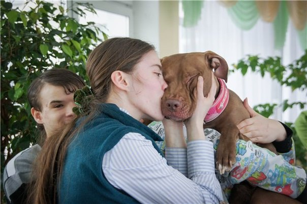 Питбули собаки терапевты в России