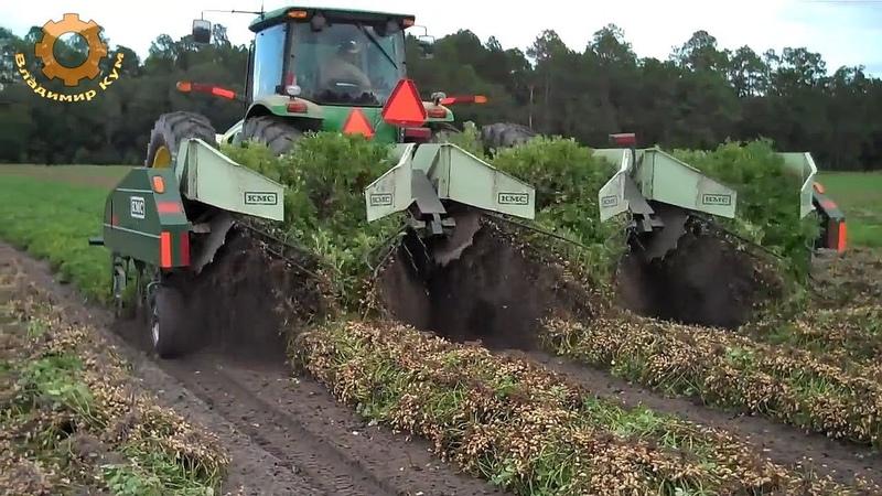 Как выращивают арахис в Америке