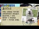 Собака-скейтбордист