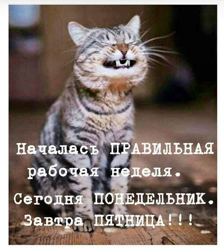 enXlcKga4RU - Дождались!