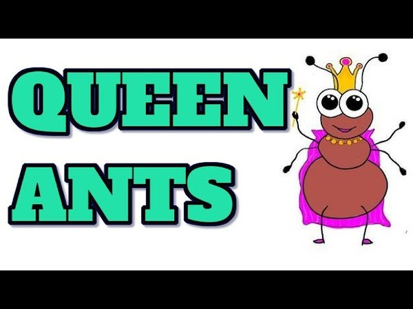 [Animal 26] Suprise fact about ALL ABOUT QUEEN ANTS