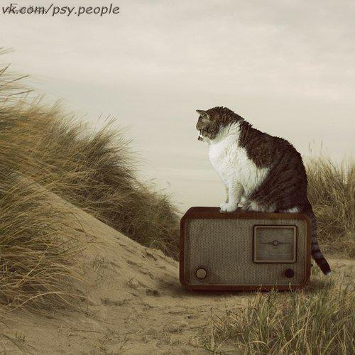 """ПРИТЧА """"ЗА СЧАСТЬЕМ НЕ НАДО БЕЖАТЬ!"""" Старая Мудрая Кошка лежала на травке и грелась на солнышке. Тут мимо нее пронёсся маленький шустрый котёнок. Он кувырком прокатился мимо кошки, потом резво подскочил и снова начал бегать кругами. — Что ты делаешь? – лениво поинтересовалась кошка. — Я пытаюсь поймать свой хвост! – запыхавшись, ответил котёнок. — Но зачем? – засмеялась кошка. — Мне сказали, что хвост – моё счастье. Если я поймаю свой хвост, то поймаю и свое счастье. Вот я и бегаю…"""