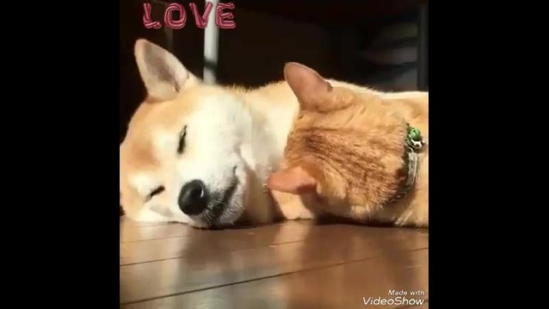 Дружба собачки и кошечки