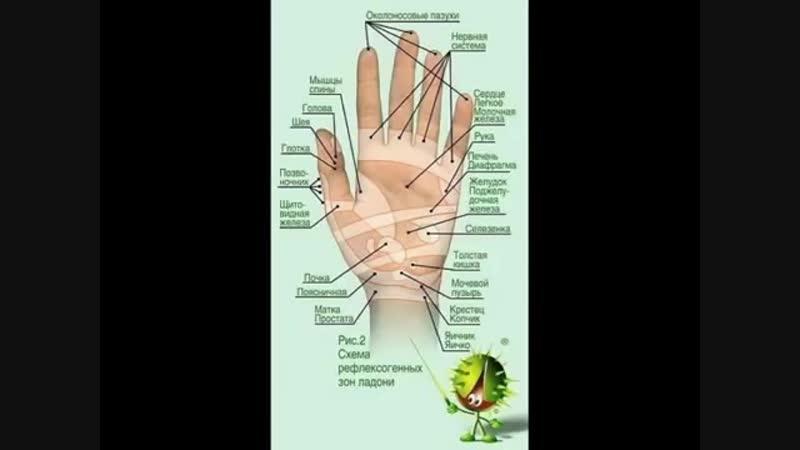 Точечный массаж рук при болезнях внутренних органов
