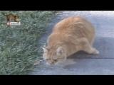 коты рыгают под nu-metal