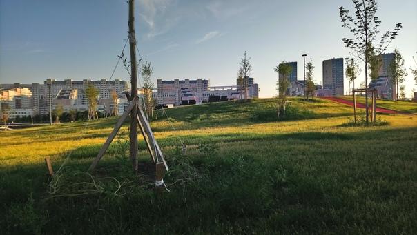 Высота холма три метра, на вскидку. Деревья только-только посадили. Специально молодыми. Приятно, очень.  12 июля 2018