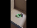 Hamster Drifting Skills