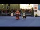 Цыганочка с выходом - Танцы с собаками Евразия 2014.