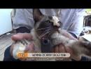 Южная Корея. Животные. Говорящий кот. 1502
