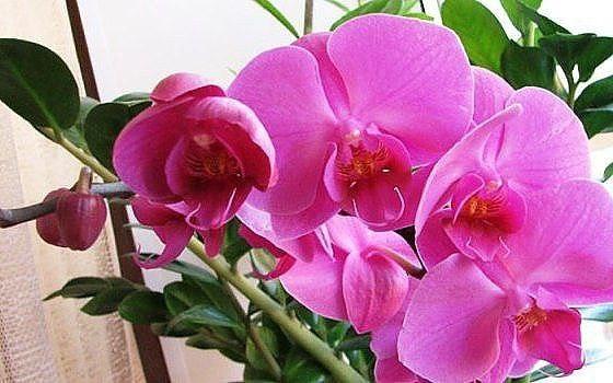 Как поливать орхидею в домашних условиях – советы флориста