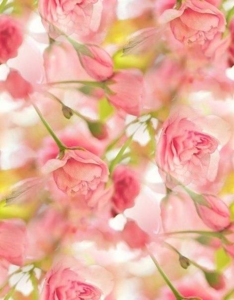Цветочные и растительные фоны - Страница 3 IeDtDuuWVvg