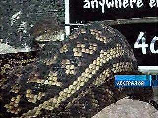 В Австралии 5-метровый питон съел собаку прямо на глазах у ее хозяев - Первый канал