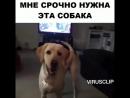 БАРБОСКИН-ОФИЦИАНТ