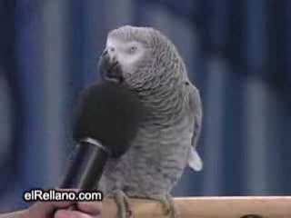 Talking Parrot Einstein