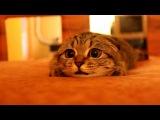 Котейку плющит