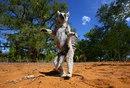 Оказывается, сегодня Международный день лемура, о чем, стыдно признаться…