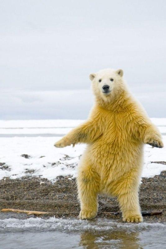 Танцующий смайлик, бесплатные фото ...: pictures11.ru/tancuyushhij-smajlik.html