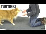Как собаки реагируют на магию. Часть 2