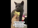Кота тянет блевать с дуриана