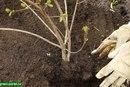 20 деревьев будут посажены в честь 20-летнего юбилея концерна.  Саженцы появятся на улице Шаманова в Академическом...