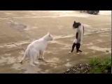 Прикол! Кот владеет карате. Юмор! Прикол! Смех