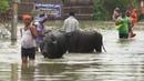 В Индии после наводнений распространяется лептоспироз