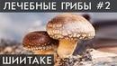 ГРИБ ШИИТАКЕ Уникальные лечебные свойства высших грибов Фролов Ю А
