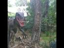 DinoPark DinoPark