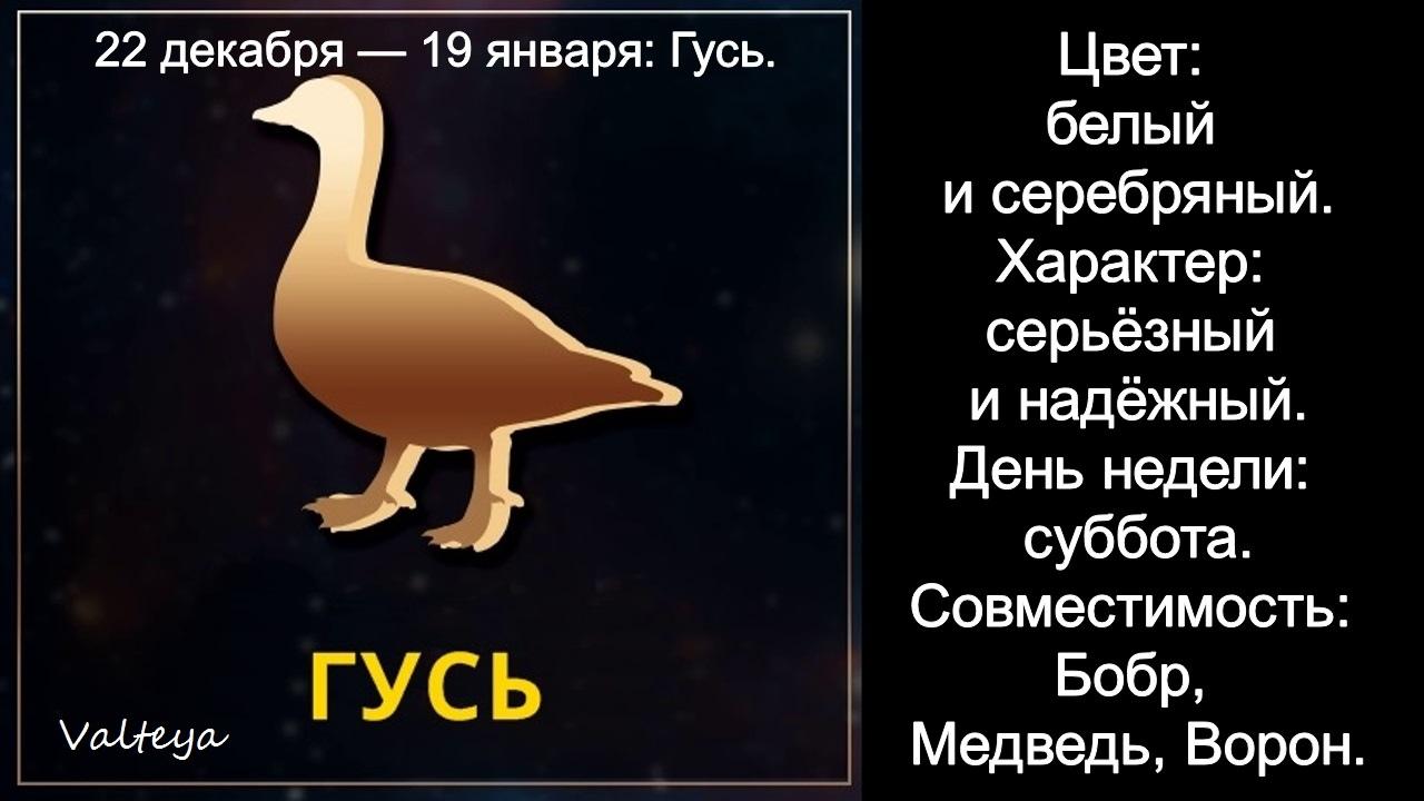 зодиак - Гороскоп американских индейцев. Тотемные животные по Знаку Зодиака. Астрология. ZotRzt8Jd7Y