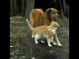 Любят друг друга, как кошка с собакой! Это вот так