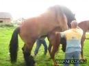 секс с конем