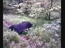 Отец на охоте 2008г (кабан)