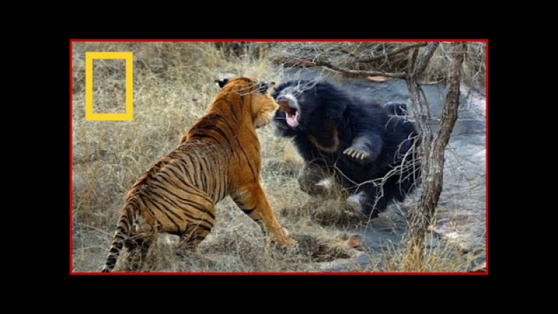 The Most Extreme Predators Animals National Geographic Wild