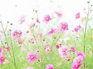 """Оригинал - Схема вышивки  """"Полевые цветочки """" - Схемы автора  """"Katya2606 """" - Вышивка крестом."""