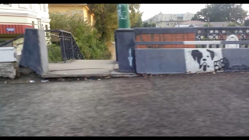 Собаки Липецк граффити